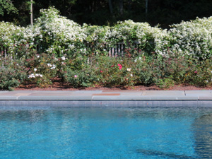 The specially designed planting of flowers and shrubs enhance a pool area.