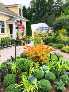Mums and Asters are here Along With Our Big Fall Plant Sale! Now through September 30th!