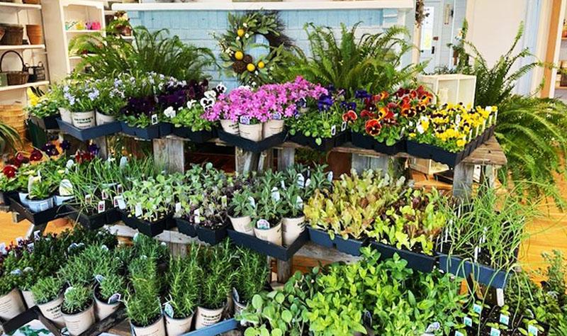 Plants in the Garden Center