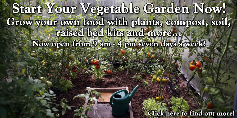 Start Your Vegetable Garden Now! Grow your own food with plants, compost, soil, raised bed kits and more... Now open 9 am - 4 pm seven days a week!