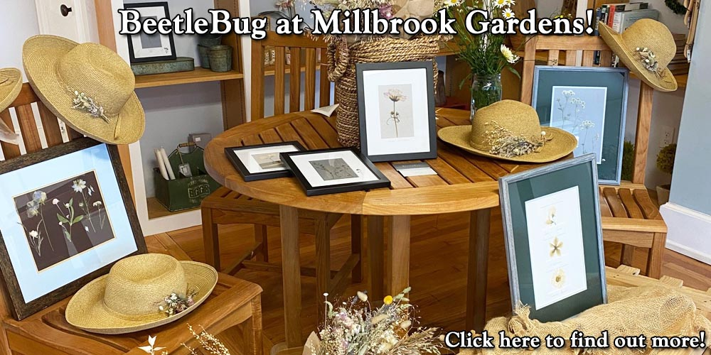 BeetleBug at Millbrook Gardens!