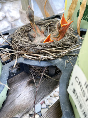 Baby birds at the Garden Center