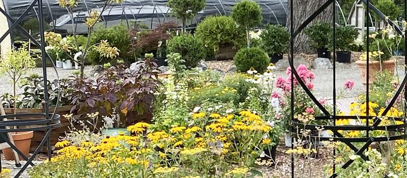 Perennials Sale July 2020