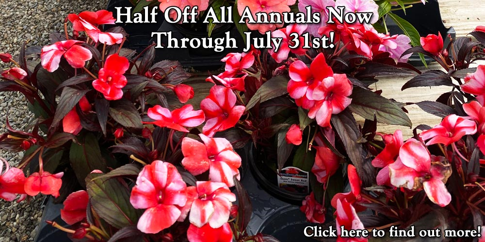 Half Off All Annuals Now Through July 31st!