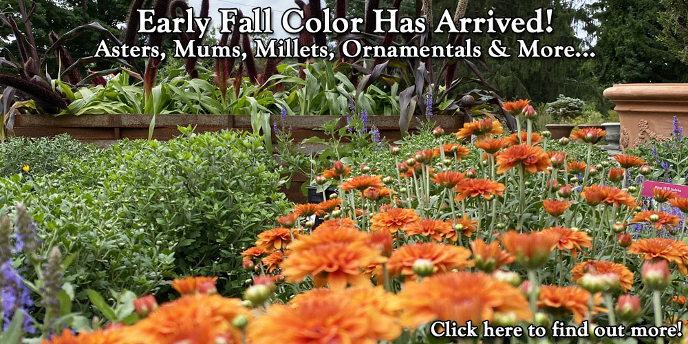 Early Fall Color Has Arrived!