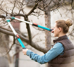 Winter Pruning Services