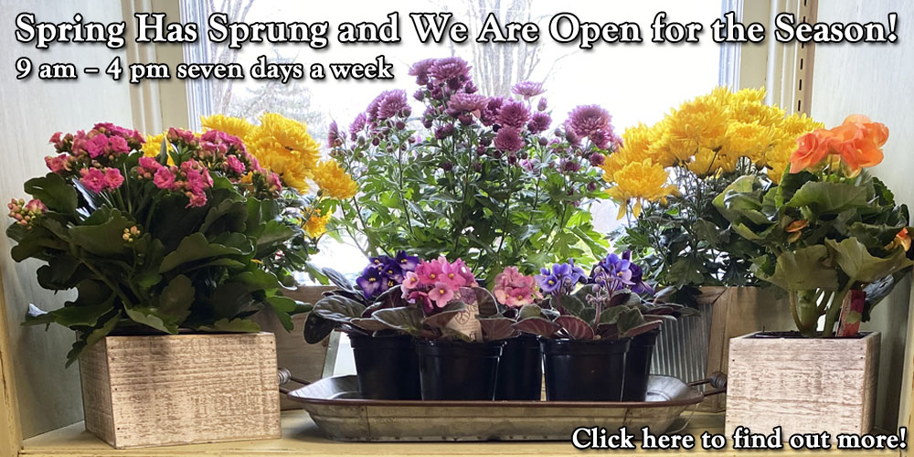 Spring Has Sprung and We Are Open for the Season!
