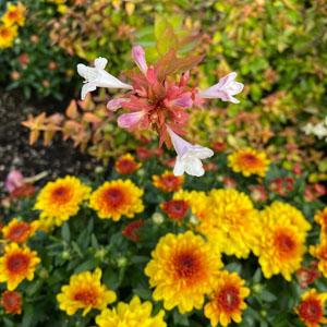 Fall plant sale detail 1