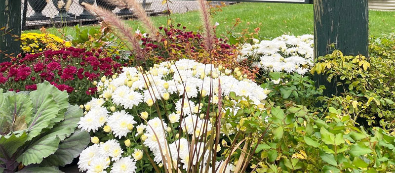 Fall plant sale header